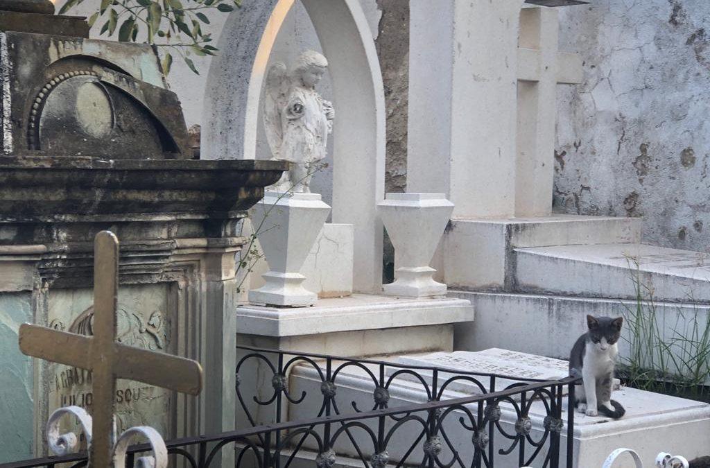 Acumula viejo panteón de Silao 159 años de eterno descanso
